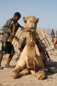 DESERT DE DALLOL (ETHIOPIE) Eth08_11