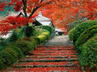 JARDINS JAPONAIS Garden11