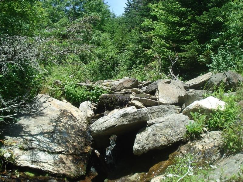 Brookies atop Mt Mitchell Dsc03213