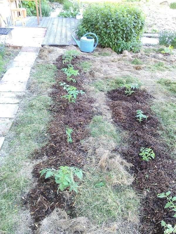 Jardinage en tout genre - Page 2 Img_2013