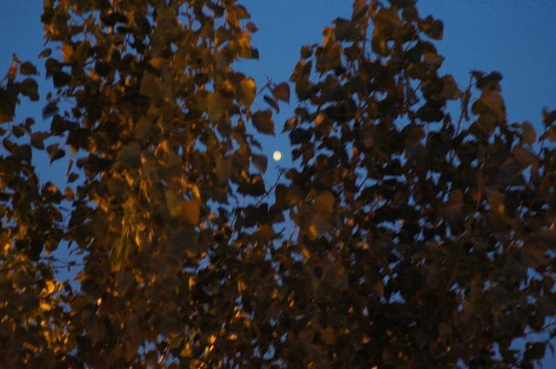 ????: le 20/06 - Lumière étrange dans le ciel  - dunkerque (nord)  Dsc00117