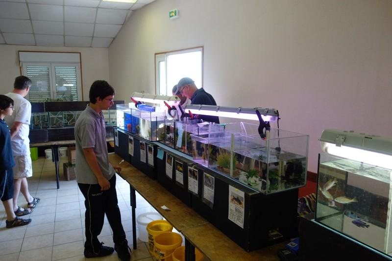 Journée aquariophile à Moyen (54) le 08 juin 2014 Dsc01112