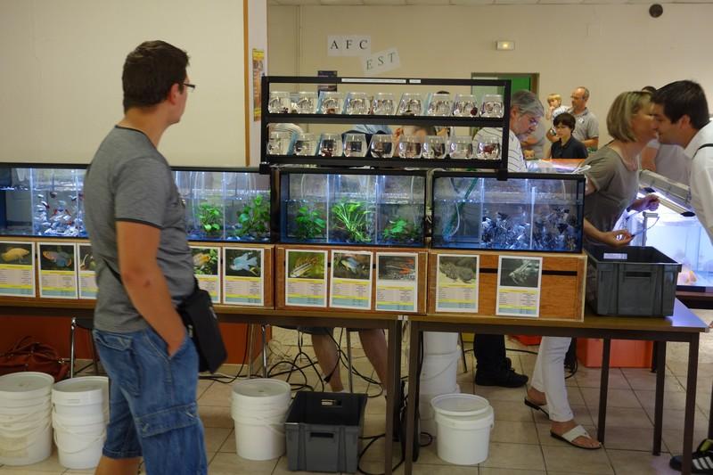 Journée aquariophile à Moyen (54) le 08 juin 2014 Dsc01120