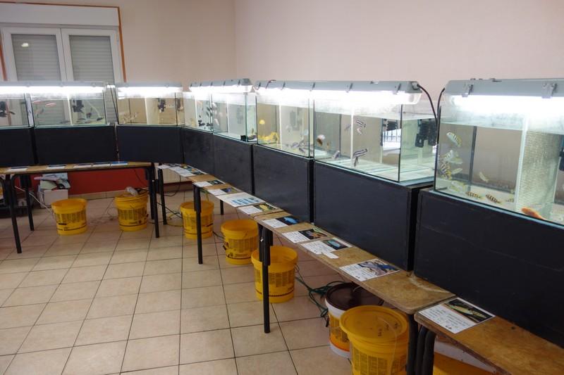 Journée aquariophile à Moyen (54) le 08 juin 2014 Dsc01123