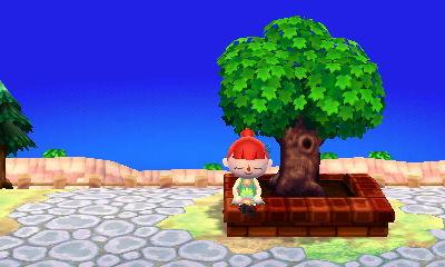 L'arbre du Maire Hni_0010