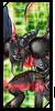 Indice de Digimon traducidos  Aegioc11