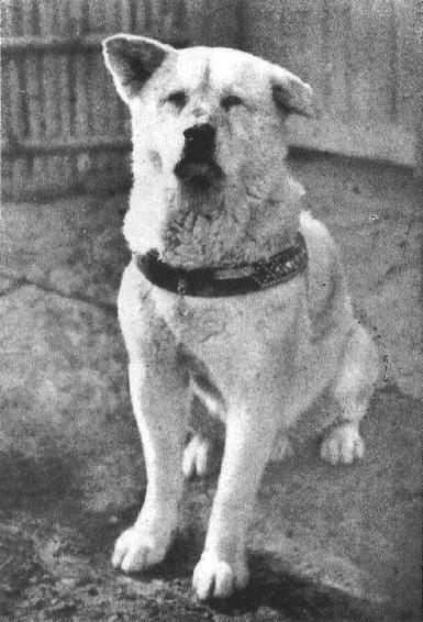 Hachikō : le meilleur ami de l'homme  Hachik10