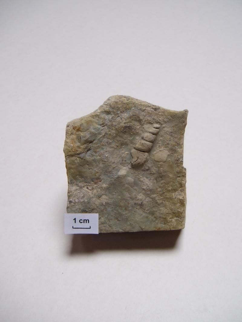 Mollusque Pc090010