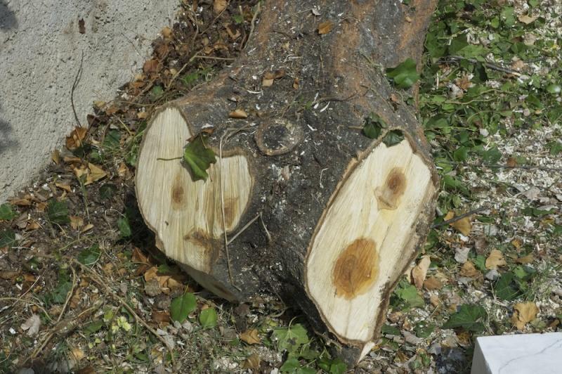 comment secher le bois sans qu'il se fende? - Page 3 Dsc_4710