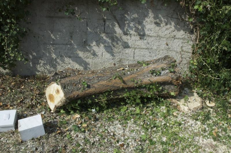 comment secher le bois sans qu'il se fende? - Page 3 Dsc_4711