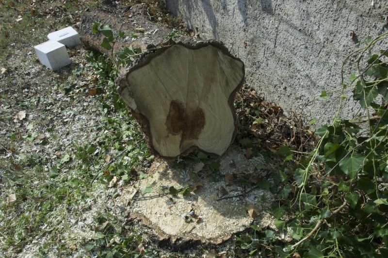 comment secher le bois sans qu'il se fende? - Page 3 Dsc_4712