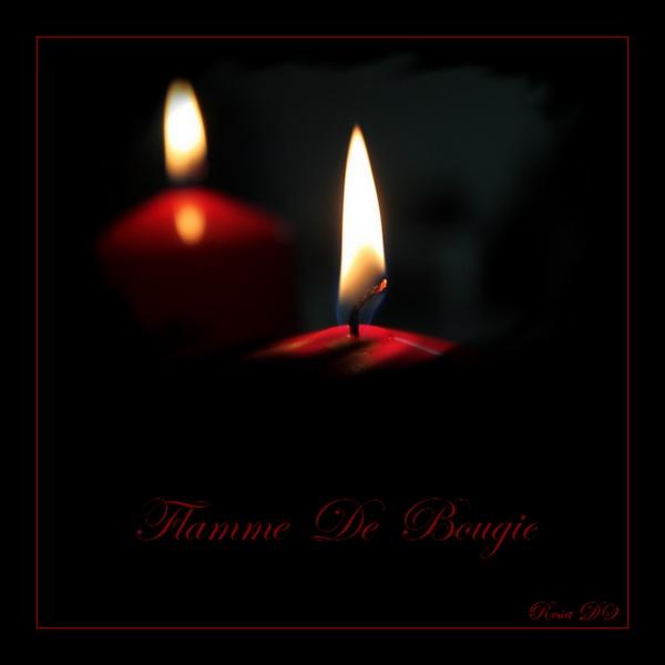 Concours du mois de janvier 2011. Thème : La lueur d'une flamme Rosa3_11