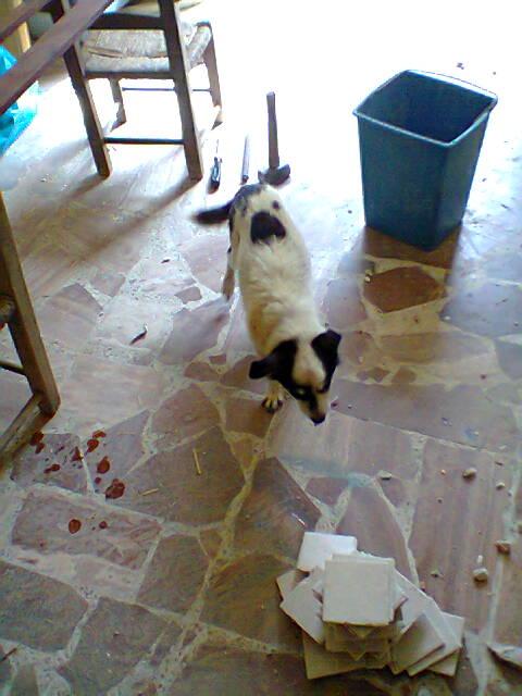 Mi costruisco la casa..!!! Questo si che è più di un restauro... Foto0343