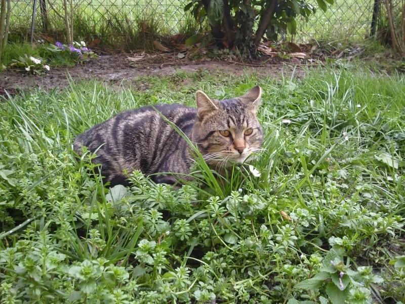 Photographie de chiens & chats - Page 2 Photo315