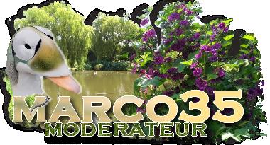 aquacoincland Marco11