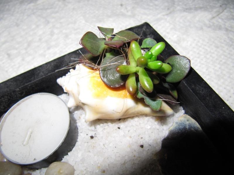 succulentes , coquillage  00910