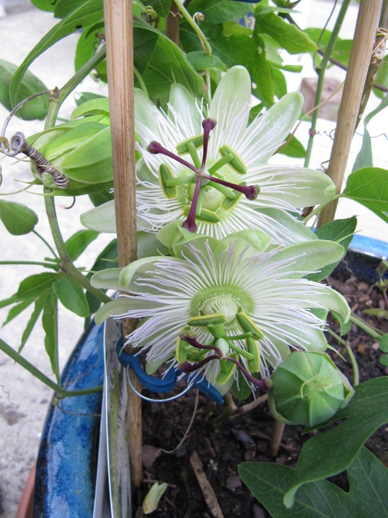 floraisons macro - Page 14 01712