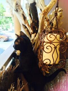 Chat noir 5 mois Var Plume10