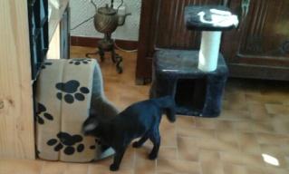 Chat noir 5 mois Var Plume_11