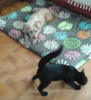Chat noir 5 mois Var Plume_12