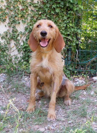 Adopter ou ne pas adopter un deuxième chien ? Garanc10