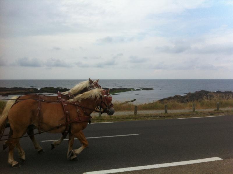 Une journée de balade en bord de mer Img_4512