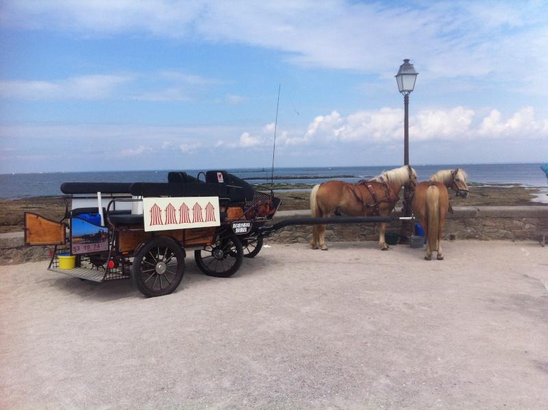 Une journée de balade en bord de mer Img_4610