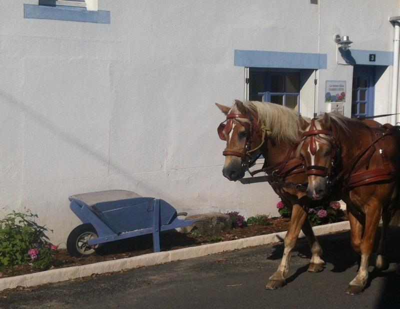 Les chevaux de Congor ! Img_5411