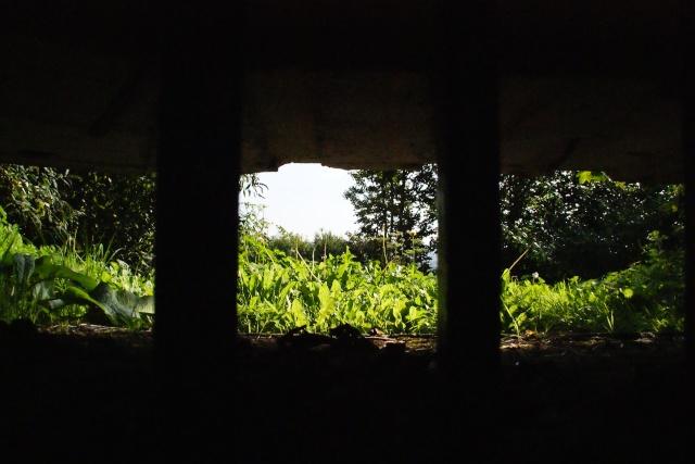 41 - Le jardin vu d'une fenêtre... photos reçues Dsc01711
