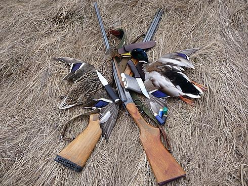 Сроки открытия осенней охоты 2012 15145010