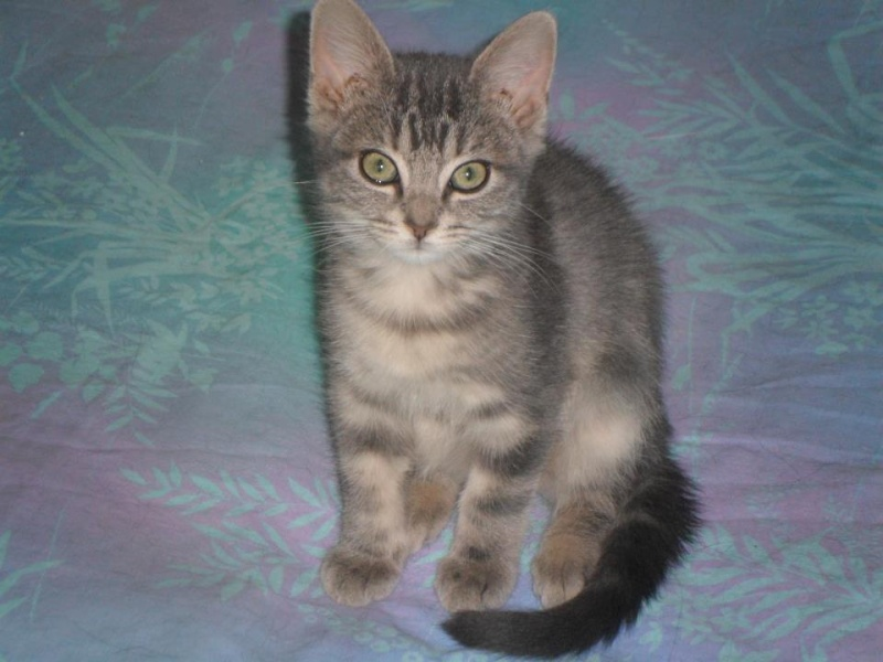 Hyndie  petit chaton craquant...... 31165510