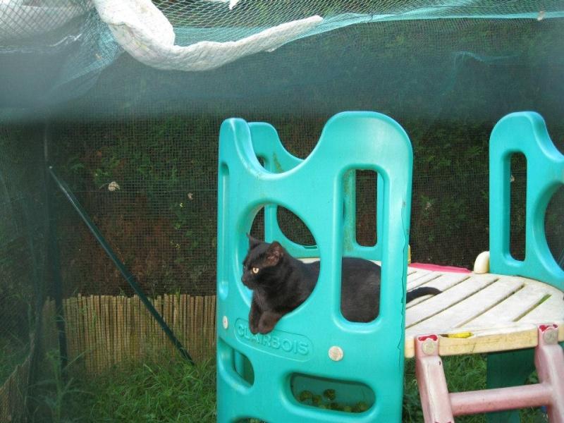 [SAUVETAGE] Beaux Yeux - loulou noir sauvé de la rue en mauvais état - né en 2009 58169510