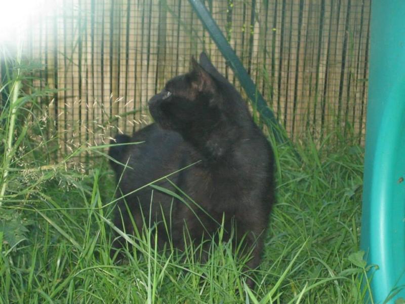 [SAUVETAGE] Beaux Yeux - loulou noir sauvé de la rue en mauvais état - né en 2009 93509810