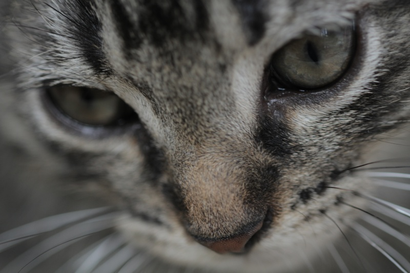 Prise en charge du 31/05/2012 - Petit tigré - ROUBAIX Atelie10