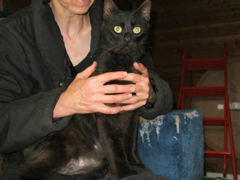 [SAUVETAGE] Beaux Yeux - loulou noir sauvé de la rue en mauvais état - né en 2009 Beaux_11