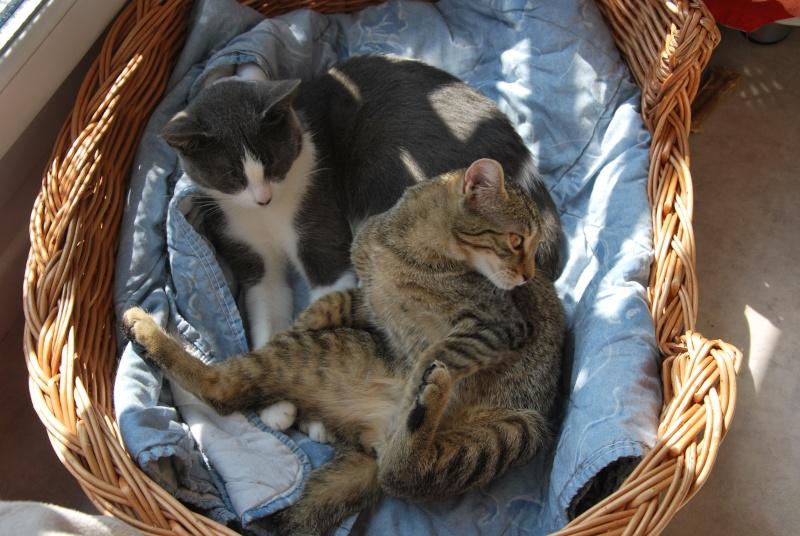 [ADOPTION]  Louna superbe chatte grise et blanche - HENIN BEAUMONT - Prise en charge 15/03/2012 Dsc_0615