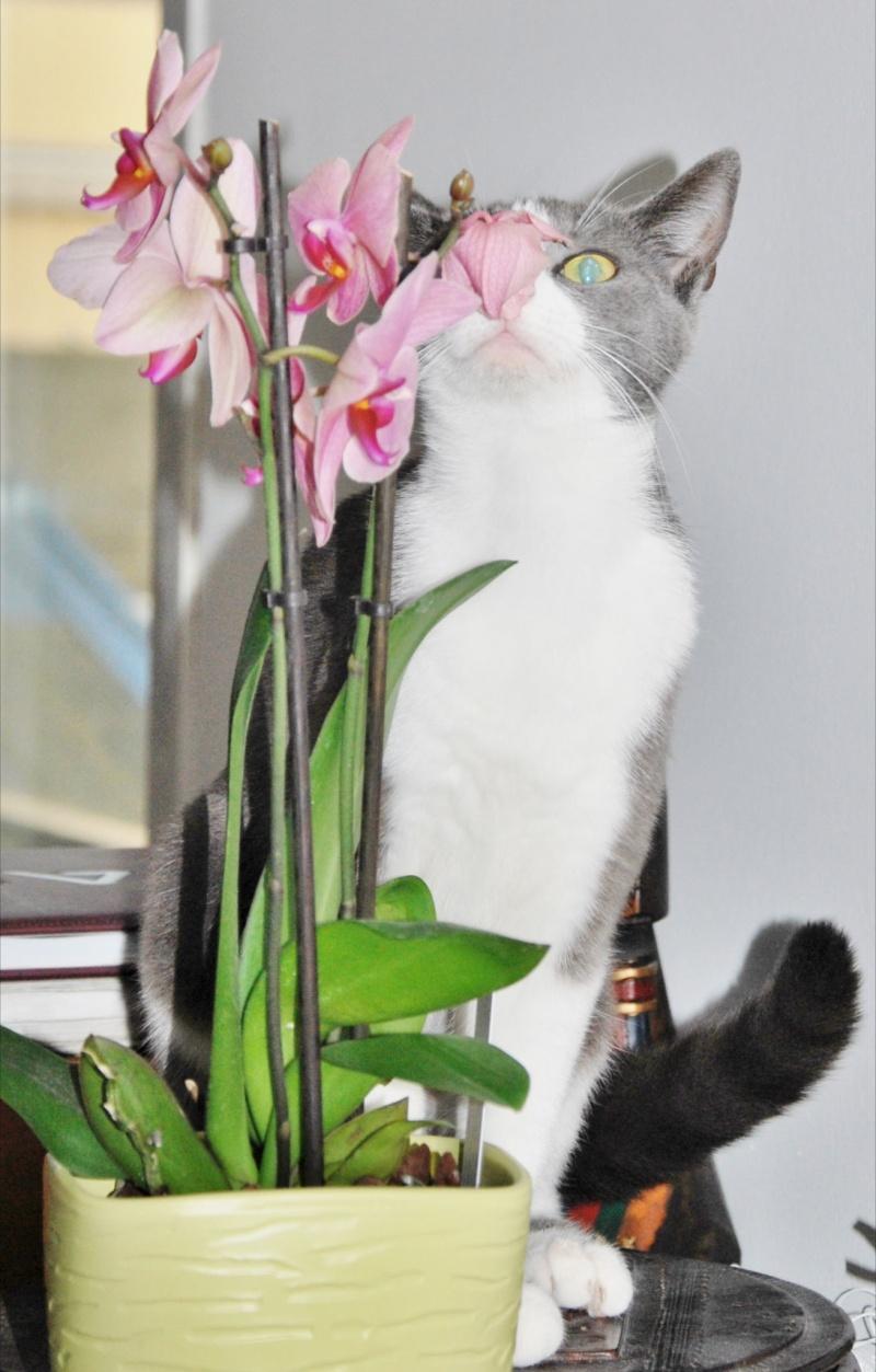 [ADOPTION]  Louna superbe chatte grise et blanche - HENIN BEAUMONT - Prise en charge 15/03/2012 Dsc_1110