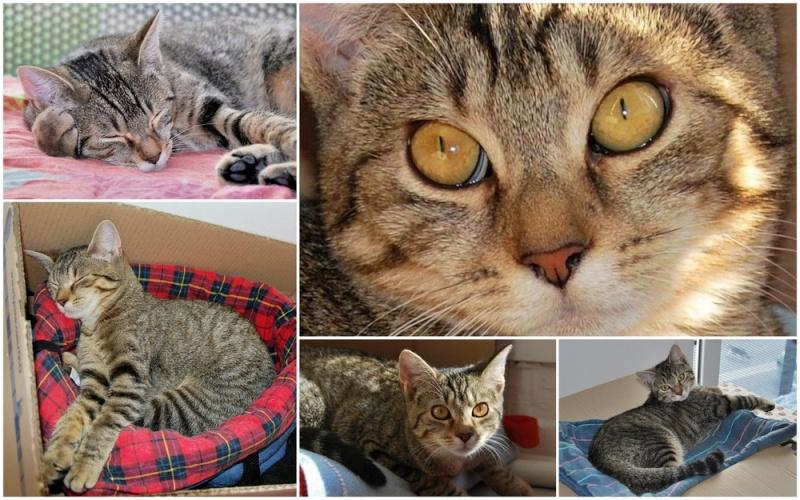 Héra beau chaton tigrée, née le 14 mars 2012 - HENIN BEAUMONT Haramo10