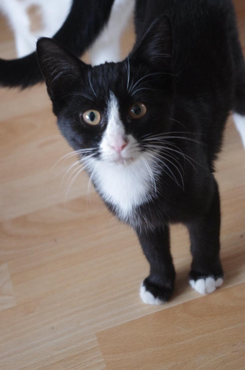 [SAUVETAGE] Harmonie - joli chaton biberon noir et blanc - BEUVRAGES Harmon12