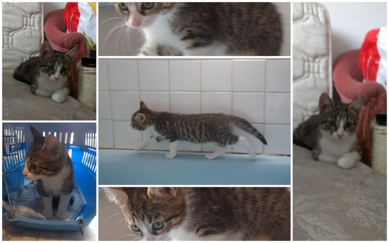 Heila très beau chaton femelle - BEUVRAGES Heilam10