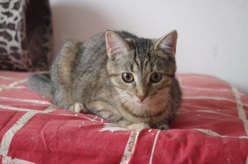 Heylie belle petite puce tigrée, née le 28 mars 2012, BEUVRAGES Heylie12