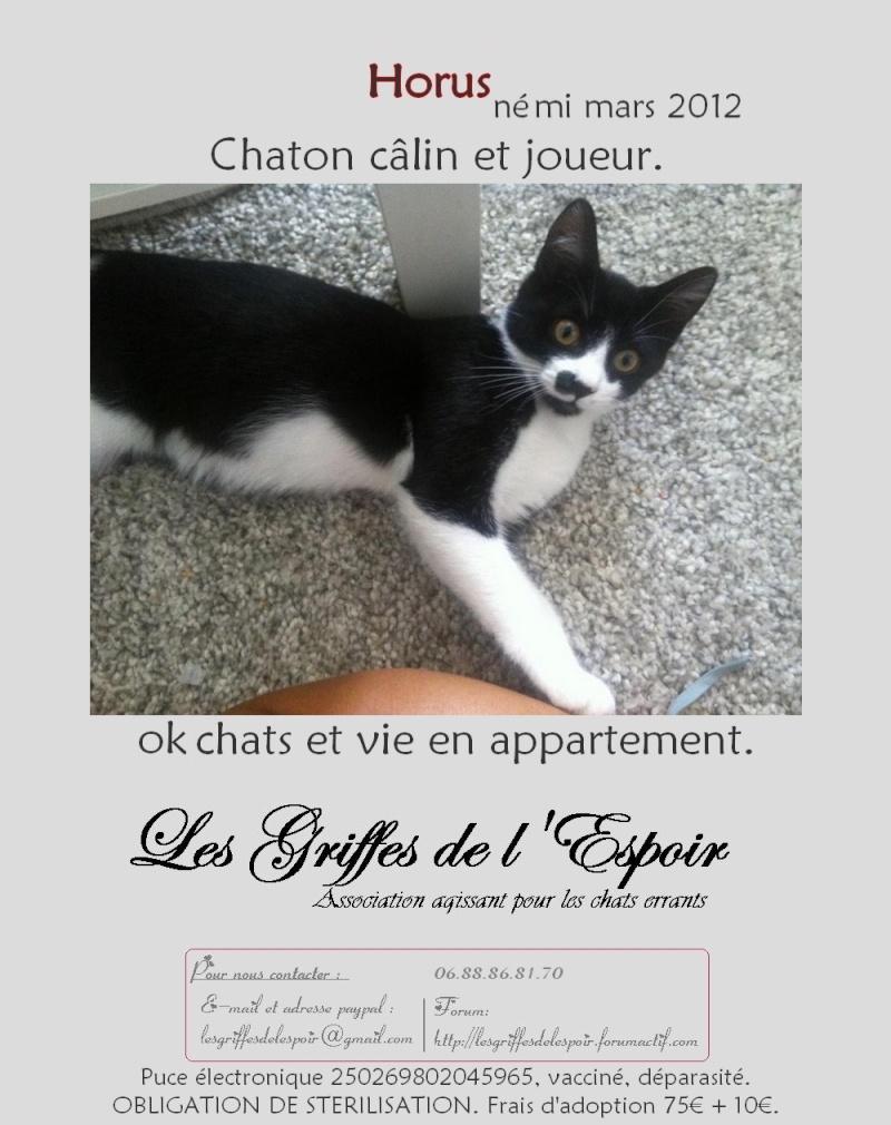 Horus beau chaton noir et blanc , né le 15 mars 2012 - FACHES THUMESNIL Horusa10