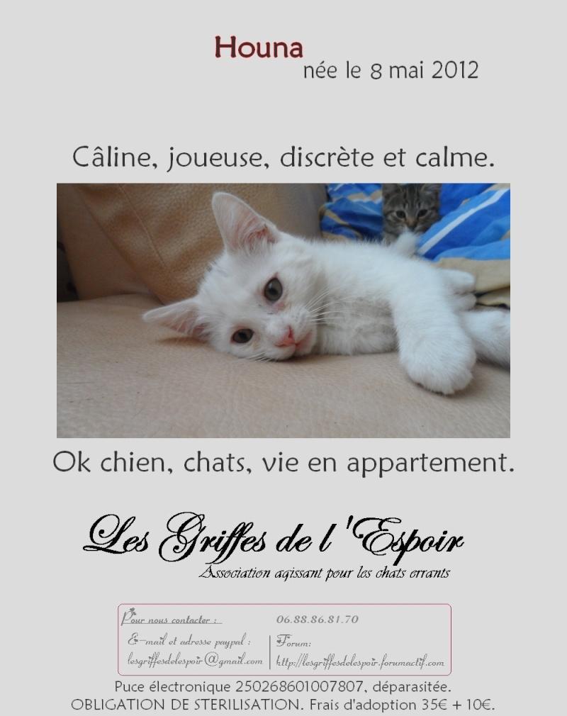 Houna magnifique chaton femelle de couleur blanche - SAINT AMAND LES EAUX Hounaa10