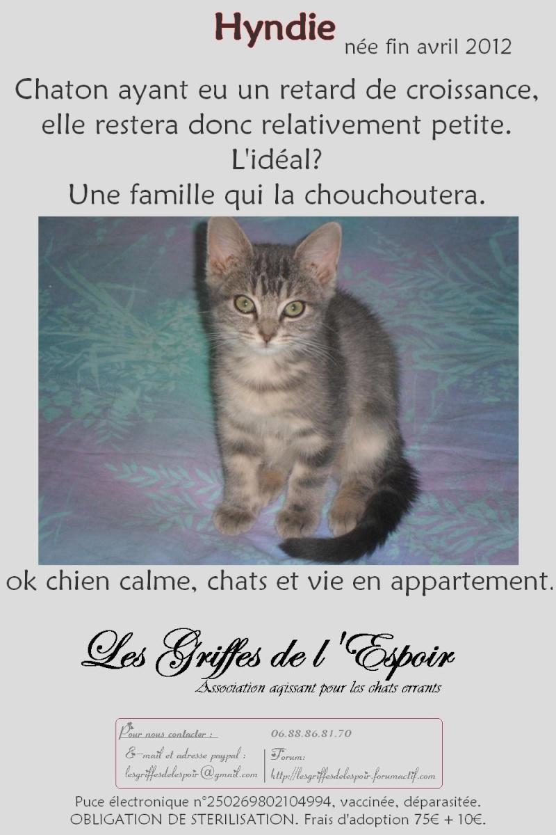 Hyndie  petit chaton craquant...... Hyndie10