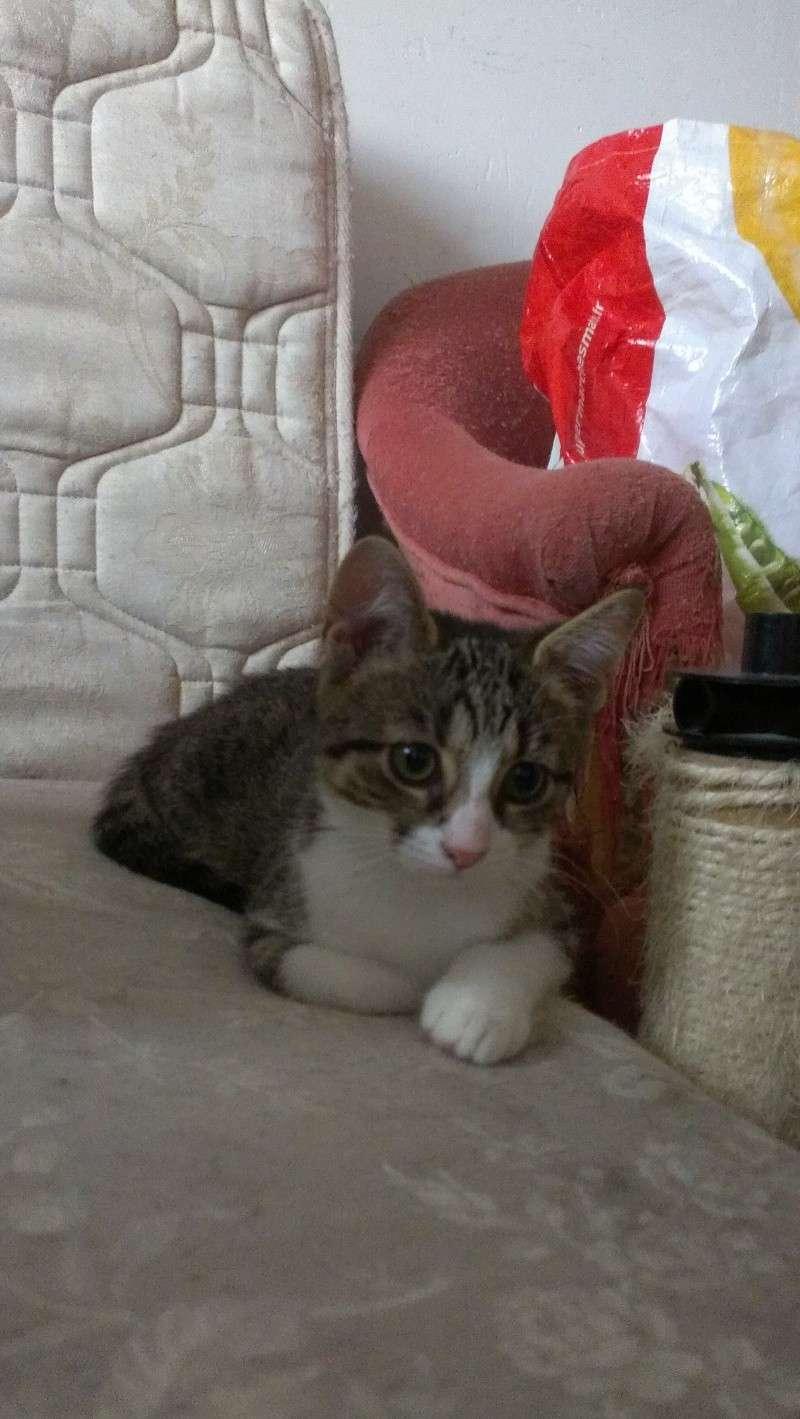 Heila très beau chaton femelle - BEUVRAGES Imag0512