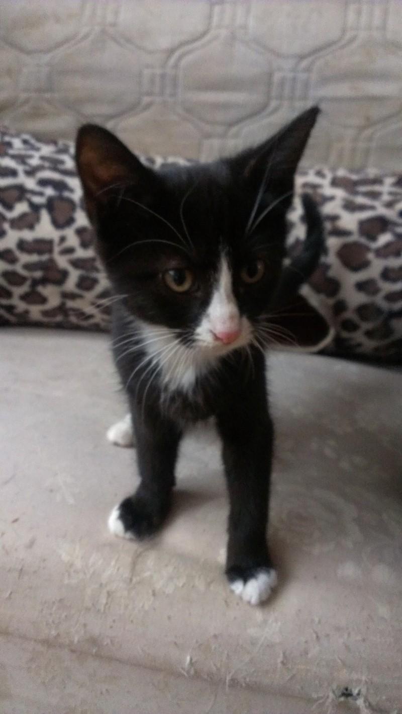 [SAUVETAGE] Harmonie - joli chaton biberon noir et blanc - BEUVRAGES Imag0612