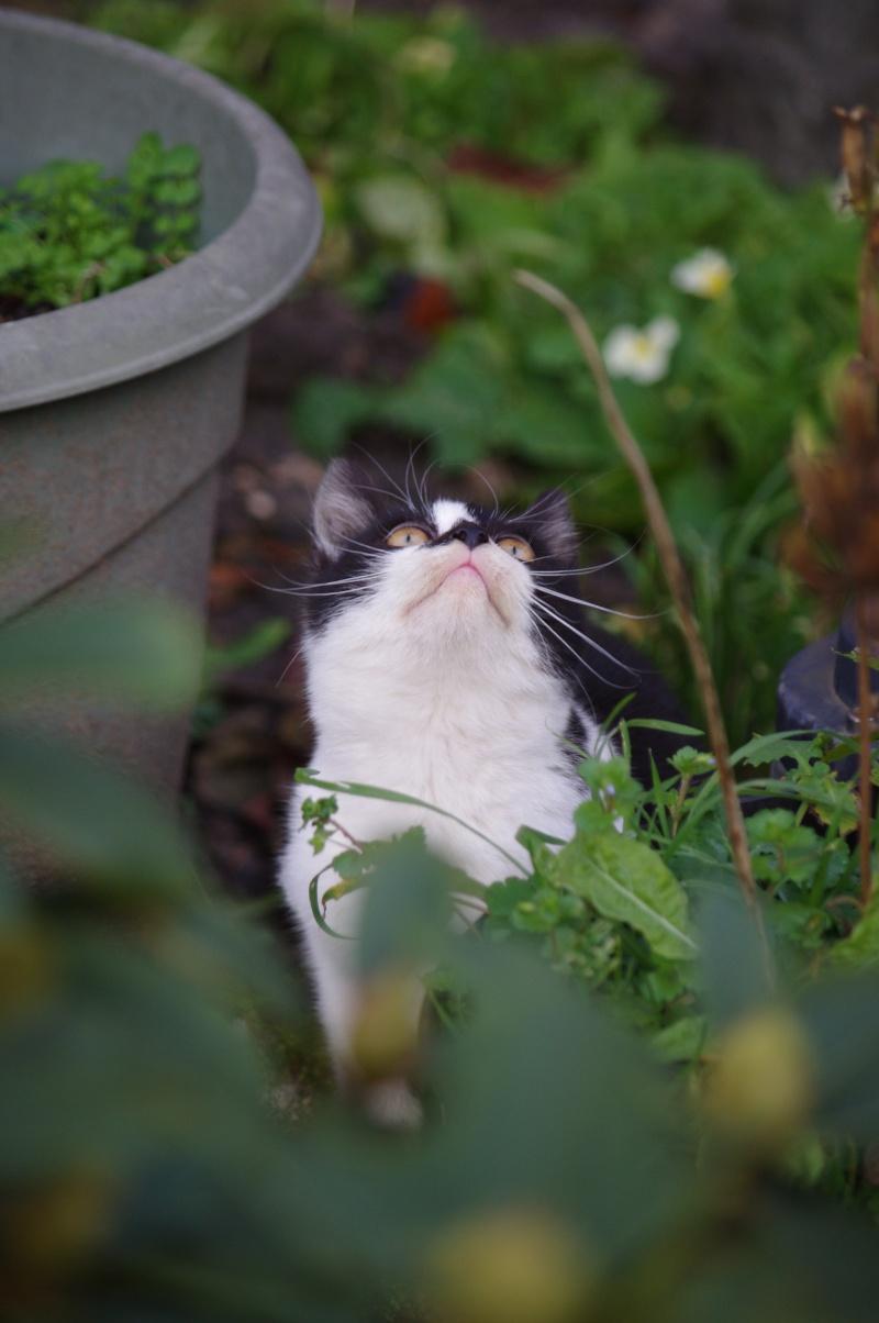 Mimi très beau chaton femelle noire et blanche Imgp1310