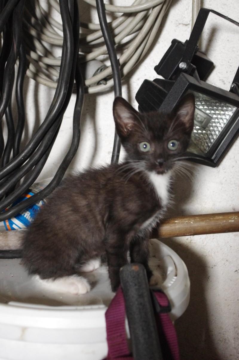 Gargamelle renommée Angie très jolie chaton femelle abandonnée au bord d'un lac département 57 Imgp2410