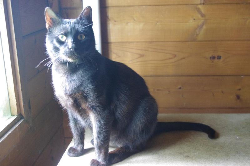 [SAUVETAGE] Beaux Yeux - loulou noir sauvé de la rue en mauvais état - né en 2009 Imgp4011