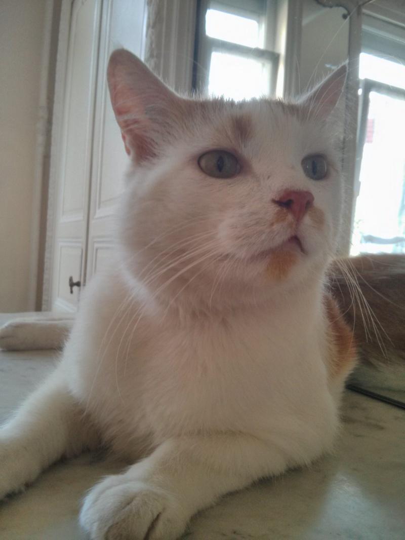 [ADOPTION] Caramel , chat roux et blanc, beau et câlin - SAINT AMAND LES EAUX - Page 2 Mamell11